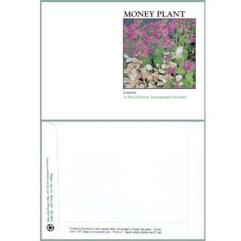 Money Plant Seeds
